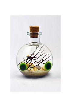 Bottle Terrarium  Marimo  Japanese Moss Ball by PinkSerissa, $24.00