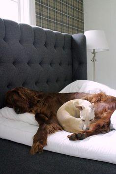 Domargård - Villa Olivia: Sängyn petaaminen koiraperheessä