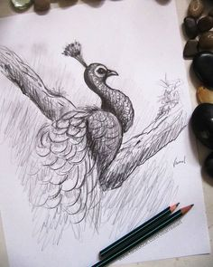 Reposting @franciscovillarrealart: A peacock.  #drawing #peacock #birds #nature #lovenature #artwork #illustration #sketch #sketchbook #dibujo #design #diseño #xalapa #veracruz #cdmx #art #gallery #pencildrawing #pencil #picoftheday #beautiful #love #photography