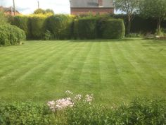 Lawn care treatments, Great Bourton , Oxfordshire Lawn Care, Stepping Stones, Golf Courses, Outdoor Decor, Green, Stair Risers, Lawn Maintenance
