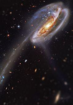 Galaxia Tadpole                                                                                                                                                                                 Más