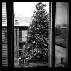 Window snow tree