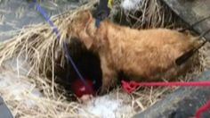 Dog that goes missing during snowstorm is rescued by firefighters from sinkhole http://ift.tt/1ROYdKc  Firefighters rescued a dog on Wednesday after it spent two days stuck in a sinkhole at The Arboretum at Penn State University. Skye a golden retriever went missing after her owners let her off her leash on Monday night during a snowstorm. [Additional reporting by the Associated Press] Read more  More about Dog Us World Us Animal Rescue and Firefighters Source : Dog that goes missing during…