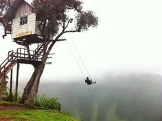 Scary tree swing nope