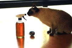 Cat's Fancy: DIY Catnip Spray >> http://blog.diynetwork.com/maderemade/how-to/cats-fancy-diy-catnip-spray/?soc=pinterest