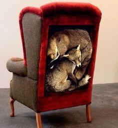 taxidermy furniture. mcurci