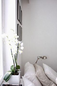 Orquideas - so fab