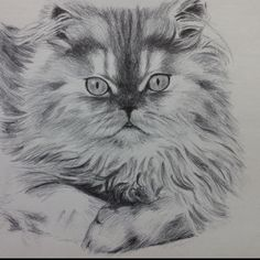 Tonight's ballpoint pen sketch is of Jack the cat.