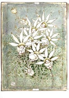 Flannel Flower babies by May Gibbs