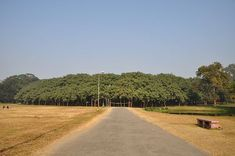 250 year old Great Banyan Tree in India- The widest tree in the world