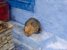 Snuggles on a cold morning in Chefchaouen Morocco http://ift.tt/2sO6c5P