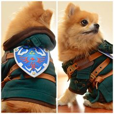 He'll break all your pots when you're not looking. Legend of Zelda Dog Cosplay by HachiCorp