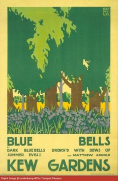 Bluebell Time - Shelley Davies