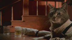 So, a cat walks into a bar....