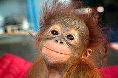 Sonrisas de animales para celebrar el Día de la Felicidad   Gol Caracol