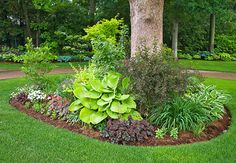 Set off hostas with other plants in contrasting hues. Here, the burgundy of the ninebark and coralbells helps emphasize the lime-green hosta