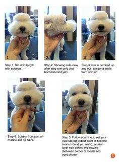 Dog Grooming Guide: Top Dog Grooming Tips Dog Grooming Tools, Dog Grooming Styles, Dog Grooming Shop, Creative Grooming, Dog Grooming Salons, Poodle Grooming, Dog Grooming Business, Schnauzer Grooming, Cortes Poodle