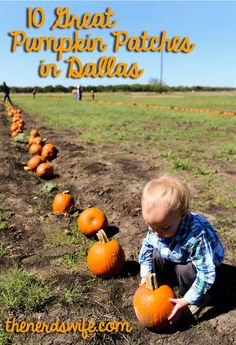10 Great Pumpkin Patches in Dallas