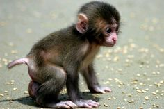 1000 Images About Cute Baby Monkeys On Pinterest Monkey