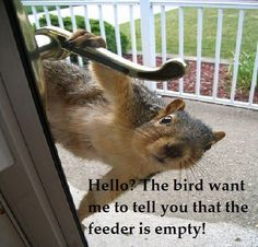 "Oh yeah, the bird.  Sure.  ""I know you have been eating the bird seed, squirrel!!"""