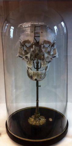 Buschene skull