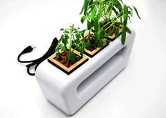For space deprived #design lovers who yearn to grow some of their own food, this contemporary designer tabletop #hydroponic #planter fits the bill.