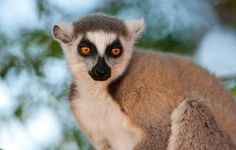 10 Most Interesting Animals of the Tropical Rainforest Rainforest Plants, Rainforest Animals, Pet Rats, Pets, Tropical Animals, Interesting Animals, Rainforests, Weird Creatures, Animal Kingdom