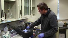 Legionnaires disease flint study _00005923