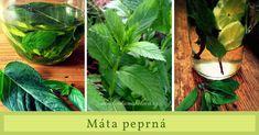 máta peprná Cabbage, Plant Leaves, Vegetables, Plants, Cabbages, Vegetable Recipes, Plant, Brussels Sprouts, Veggies