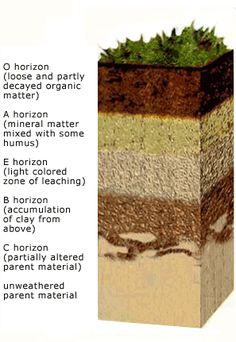 5 different type of soil profile 39 s master horizons for Soil profile definition