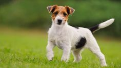 How to Pick the Best Dog for You Based On Your Living Situation