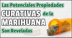 La marihuana medicinal o cannabis ha sido legal por 18 años, ahora, sus propiedades y usos medicinales son el enfoque del Dr. Allan Frankel. http://articulos.mercola.com/sitios/articulos/archivo/2015/01/04/marihuana-medica.aspx