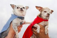 In a unique twist to the very serious issue of puppy mills in the United States, two puppy mill survivors, Harley and Teddy, will hit the road this weekend with a team from National Mill Dog Rescue to rescue puppy mill dogs. Dogs saving dogs!
