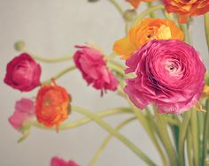 Ranunculus Bouquet Orange and Pink, Floral, Fuchsia and Yellow, Floral, Spring Flowers, 8x10 Photo Print on Etsy, $30.00