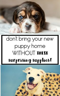 The puppy supplies that I WISH we would have bought before bringing our little puppy home!  puppy supplies, supplies for dogs, puppy checklist new puppy, etc!