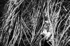 Kirk & Katie's Engagements at the Duke Gardens from our session on 5.20.17 <3 . . #madewithmagmod #magmod #magmodcommunity @magnetmod #raleighweddingphotographer #ncweddingphotographer #carolinabride #fearlessphotographers #raleigh #nc #weddingphotographer #weddingphotography #theknot #theknotnc #theknotpro #paulseiler #photooftheday #wedding #weddings #canon #5dmarkiv