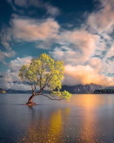 Tree Photography, Landscape Photography, Beautiful World, Beautiful Places, World 7, Unique Trees, Tree Forest, Pretty Pictures, Mother Earth