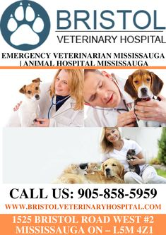 Are you looking for Emergency Veterinarian Mississauga Emergency Hospital, Emergency Care, Veterinary Services, Veterinary Care, Vet Clinics, Pet Health, Bristol, Ontario, Medical