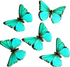 24 Teal Butterfly Paper Embellishment For  by paperpyro on Etsy
