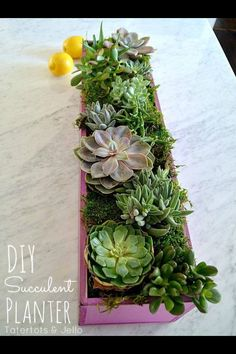 Put succulents into a drawer!