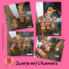 For all dog lovers. Come & see for more here: http://casabangor.wix.com/zwerge-mit-loewenherz