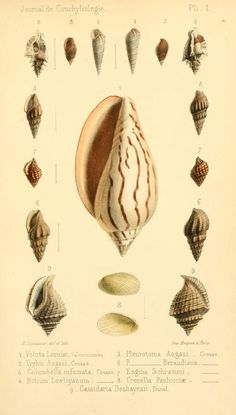 t 11 (1863) - Journal de conchyliologie. - Biodiversity Heritage Library