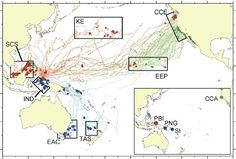 Sea Turtle GPS Shows Ocean-Spanning Leatherback Buffet