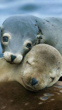 """Awe... look at these baby seals """" Aren't they the cutest"""" :)"""