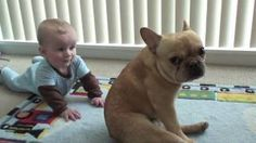 "cutest video! ""The Adventures of Charlie Bronson the French Bulldog and Baby"", via YouTube."