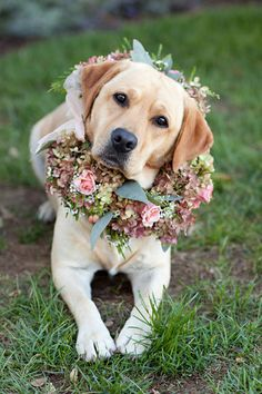 Wedding pet ideas. Dog with floral arrangement around his collar.