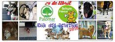 #CiudadPalomar #Eventos Recordamos EL EVENTO DEL DIA DEL ANIMAL 2015 TODOS JUNTOS Y UNIDOS POR ELLOS...