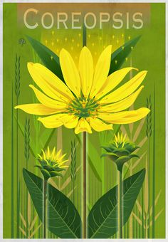 Botanical Graphics: Beneficial Plants on Behance