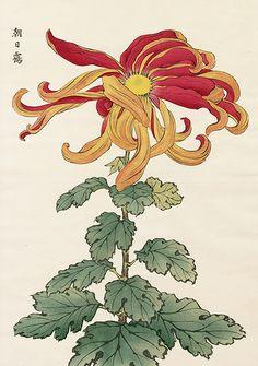 from Vintage Japanese Woodblock Prints Vintage Botanical Prints, Botanical Drawings, Botanical Illustration, Botanical Art, Watercolor Illustration, Japanese Watercolor, Japanese Painting, Chinese Painting, Chinese Art