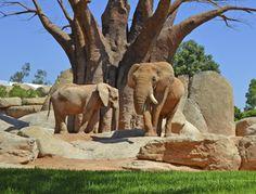 BIOPARC Valencia - Homepage - elefantes